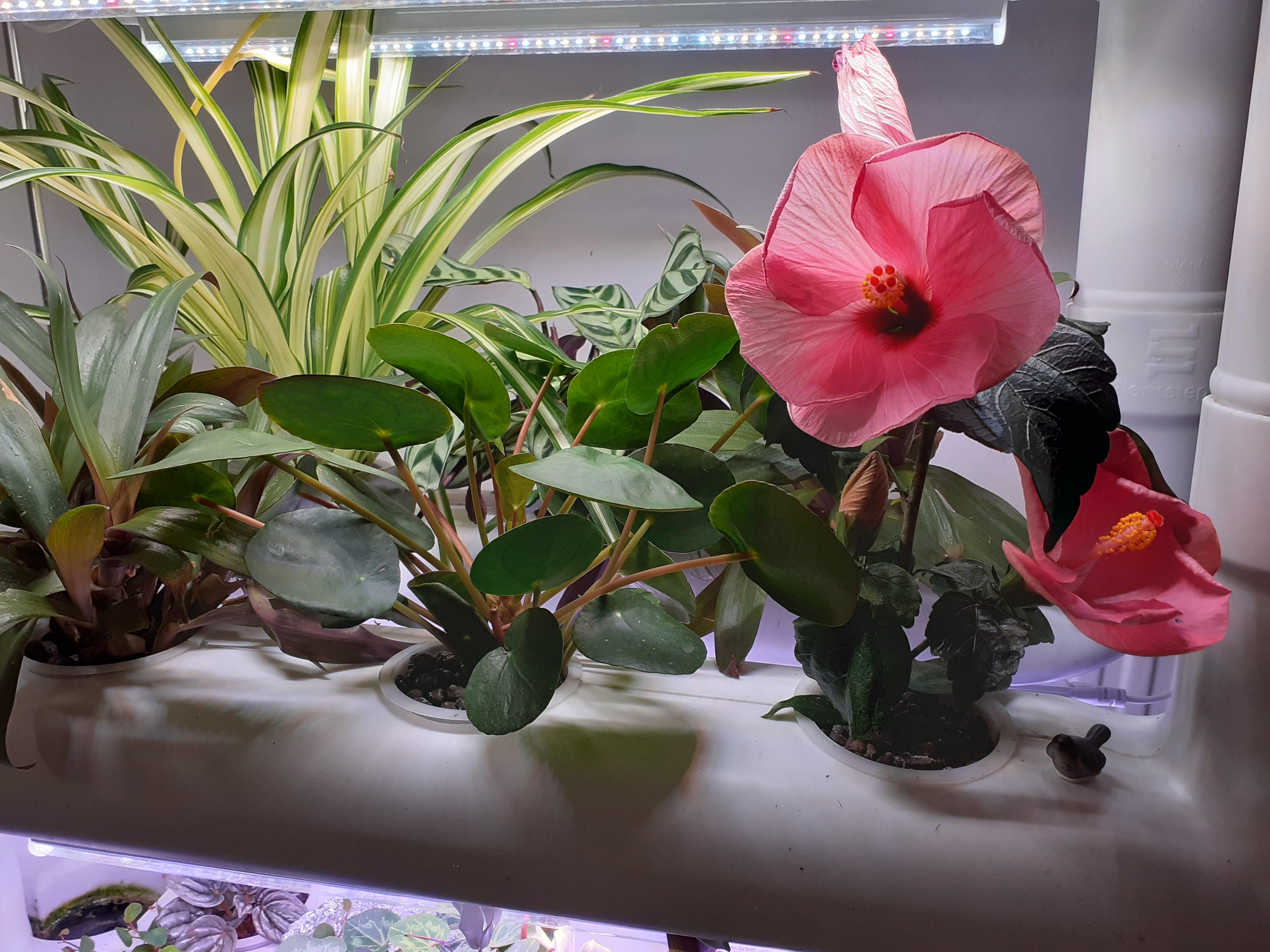 värikäs kukka sisäpuutarhajärjestelmässä